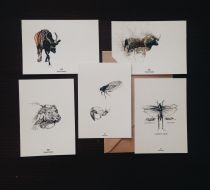 Postcard Set III - Animal Planet