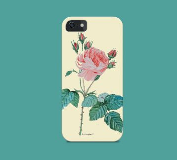 Redoute- Rose